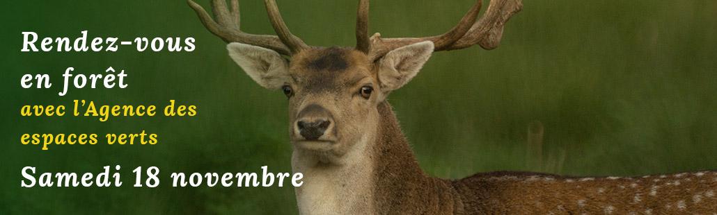 Rendez-vous en forêt avec l'Agence des espaces verts – le 18 Novembre