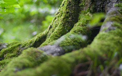La Fête de la Forêt le dimanche 6 septembre de 14h à 17h30